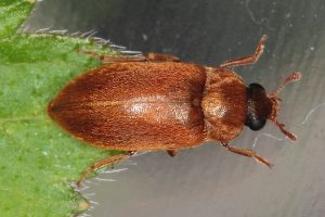 startpagina_insecten - 1