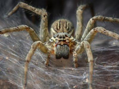 spinnen 6