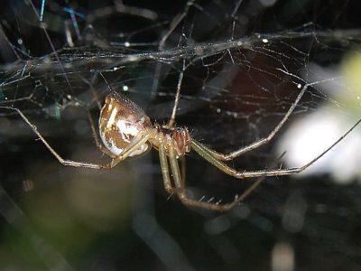 hangmatspinnen (3)
