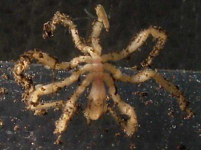 zeespinnen-2