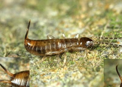 bosoorworm-3