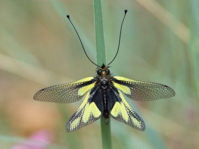 vlinderhaften-2