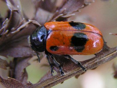 bladhaantjes-1