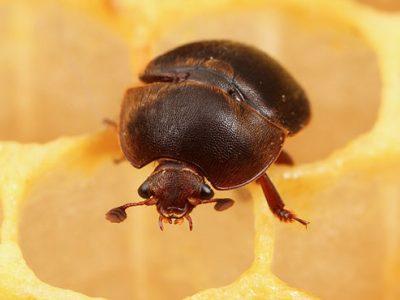 glanskevers-5