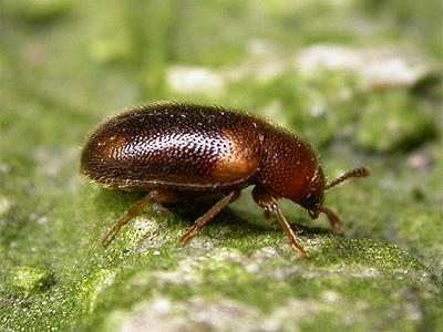 zwamkevers-1