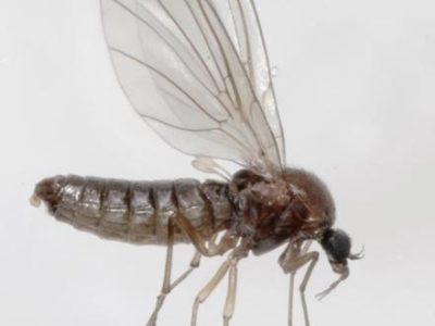 bronmuggen-3