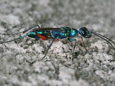 kakkerlakkendoders (1)