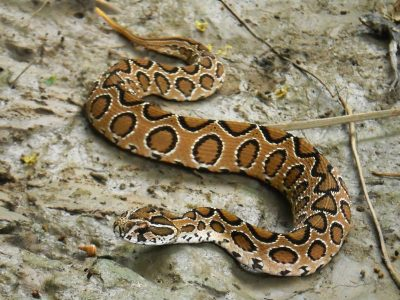 Russell's adder