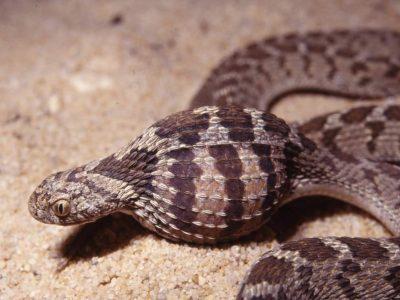 eieretende slang
