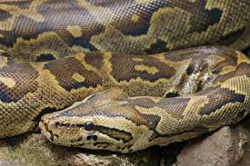 rotspython