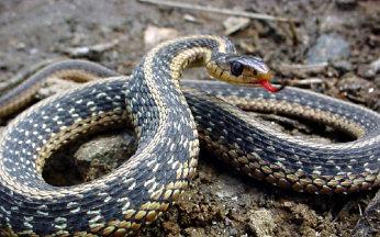 waterslangen-4