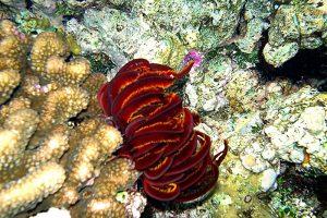 zeelelies (1)