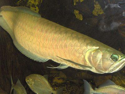 beentongvissen-2