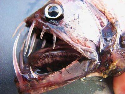 addervissen (3)