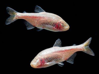 blinde vissen (6)