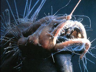 diepzeehengelvissen (3)