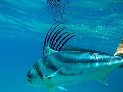 roostervissen (5)