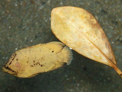 zeebladvissen (3)