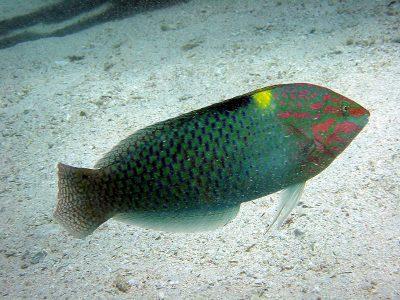 lipvissen (3)