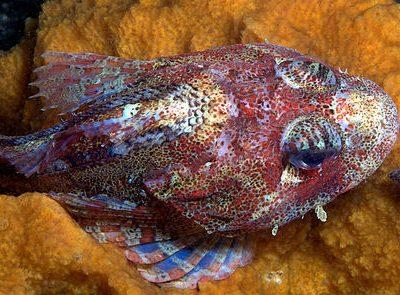 diepwaterplatkopvissen (1)