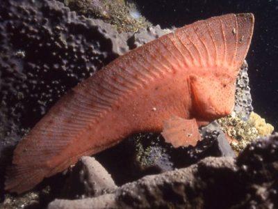 indianenvissen (4)
