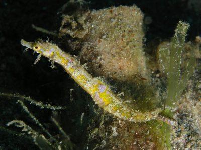zeenaalden (3)