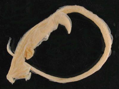 eenkaaksalen (2)