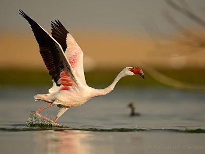 kleine flamingo (5)