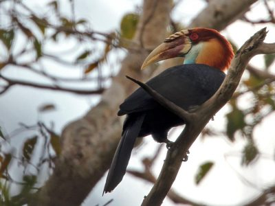 soemba-jaarvogel