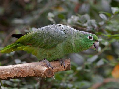 jamaica-amazone-4