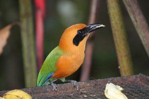 scharrelaarvogels 4