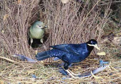 prieelvogels (1)