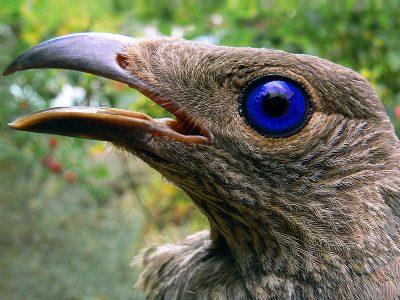 prieelvogels (4)