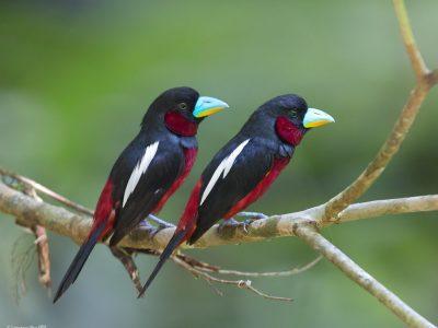 breedbekken en hapvogels (1)