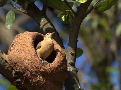 ovenvogels (4)