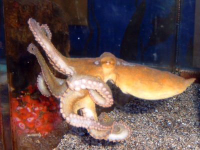 octopussen (2)