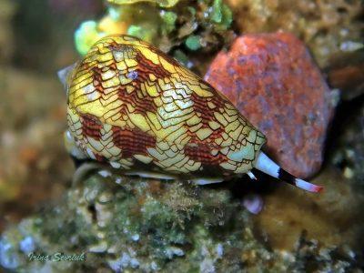 kegelslakken (3)
