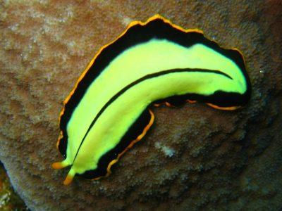 trilhaarwormen (5)