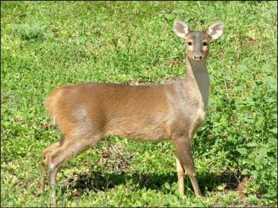 grijs spieshert (1)