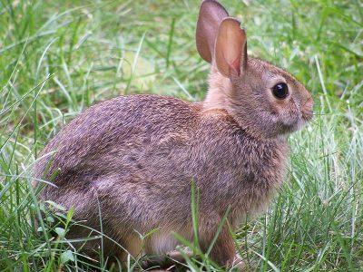 konijnen (5)
