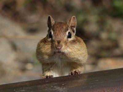 wangzakeekhoorns (4)