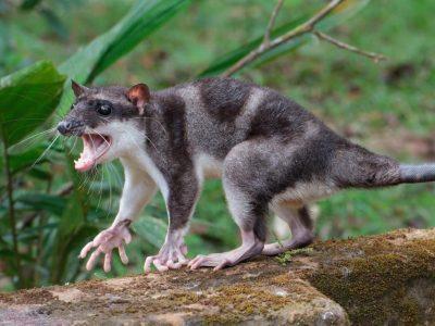 wateropossums
