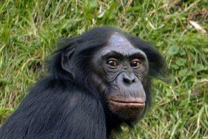 apen en spookdieren