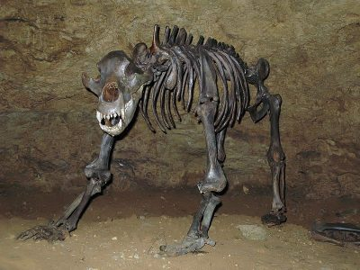 holenbeer (2)