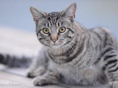 huiskat (5)