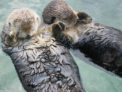otters (3)
