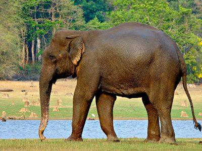 olifanten en mammoeten