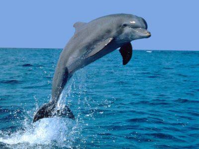 dolfijnen (3)